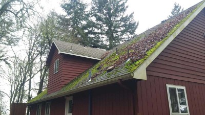 Roof covered in moss and leaves